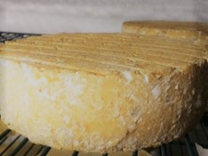 No. 26 cow's milk cheese